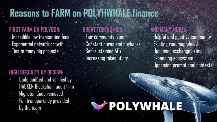 Polywhale Finance — приложение для фарминга в сети Polygon.